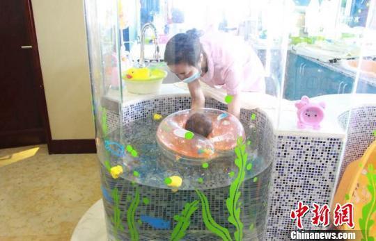 一名新生儿正在护士的陪同下,在月子会所的泳池中戏水。钟升摄