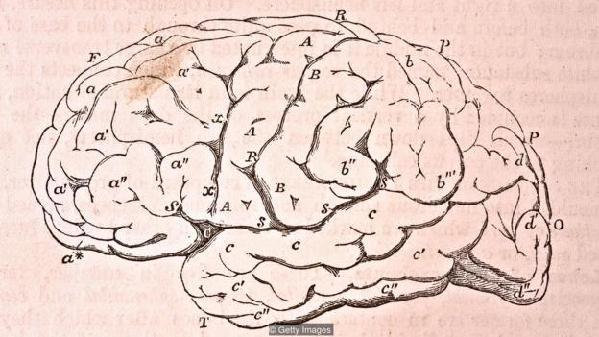 我们的大脑有将近1千亿个神经元,因此人脑相对身体来说可谓非常庞大。
