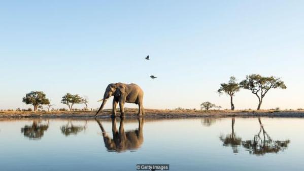大象可以认出自己的倒影。