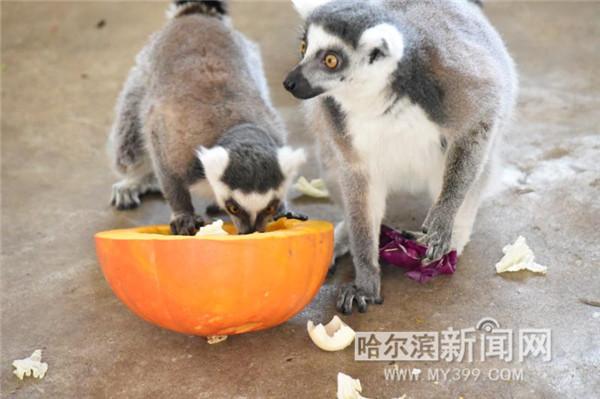 北方森林动物园里动物们的年夜饭