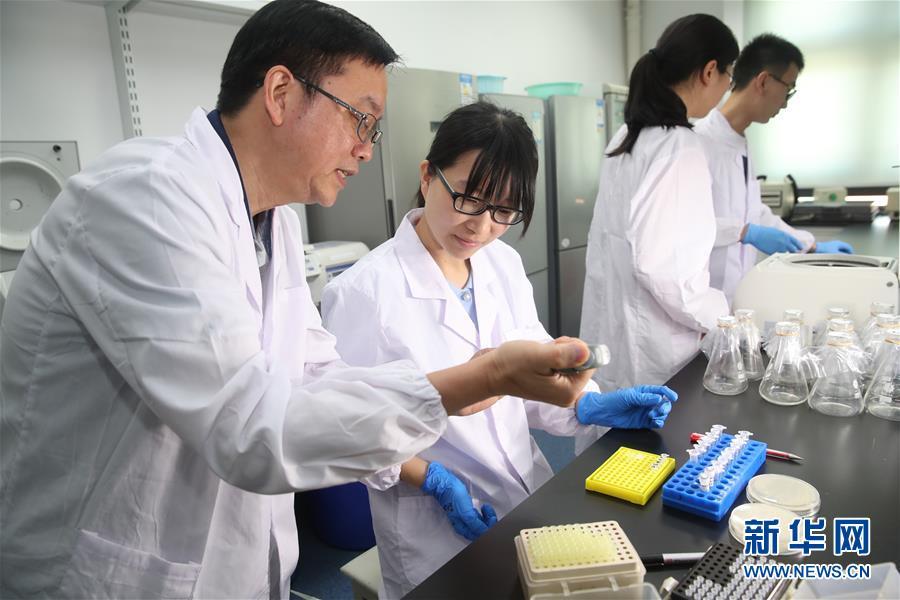 (新华全媒头条·图文互动)(1)人造单条染色体真核细胞问世 我国开启合成生物学研究新时代