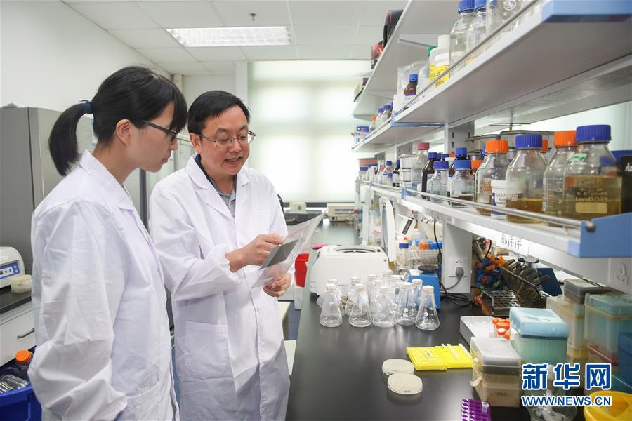 (新华全媒头条·图文互动)(5)人造单条染色体真核细胞问世 我国开启合成生物学研究新时代