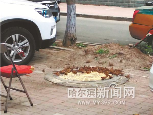 """支付宝芝麻分赚钱项目:始于一碗小米 从3只到几百只 老于和他的特殊""""宠物""""们"""