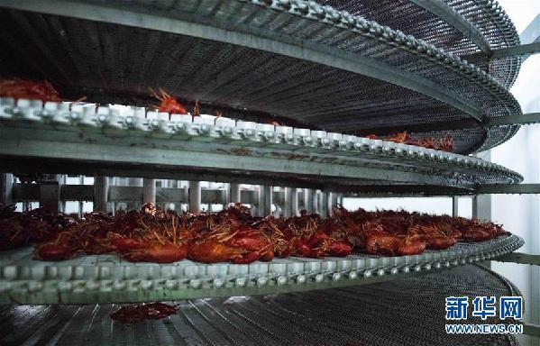 """(国际·图文互动)(12)从尼罗河畔到中国餐桌——一只""""洋""""小龙虾的36小时旅程"""