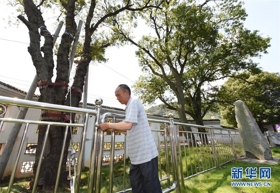 """(壮丽70年·奋斗新时代——记者再走长征路·图文互动)(5)""""红军树""""下忆初心、守初心"""