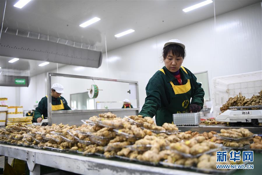"""(在习近平新时代中国特色社会主义思想指引下——新时代新作为新篇章·总书记关切高质量发展·图文互动)(3)稳住""""一头猪""""、供好""""一袋米""""、配好""""一篮菜"""