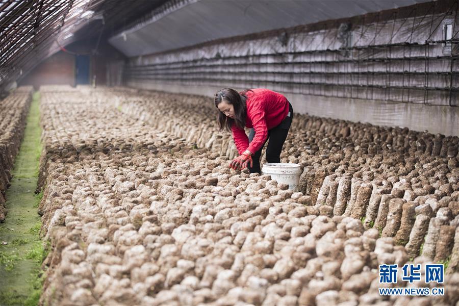 (在习近平新时代中国特色社会主义思想指引下——新时代新作为新篇章·习近平总书记关切事·图文互动)(3)希望的田野,希望的春天——各地农业生产新动态扫描