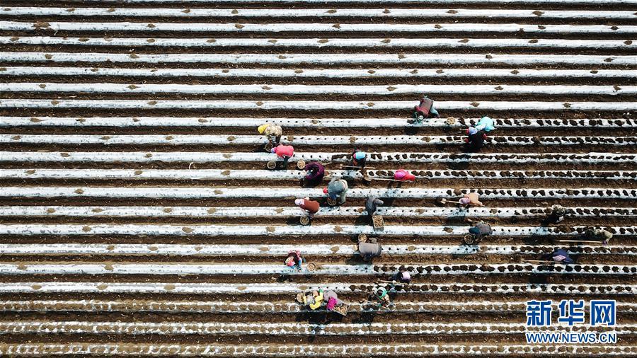 """(在习近平新时代中国特色社会主义思想指引下——新时代新作为新篇章·习近平总书记关切事·图文互动)(2)让每一寸耕地都成为丰收的沃土——我国加强耕地保护推进""""藏粮于地"""""""