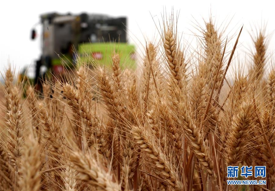 (在习近平新时代中国特色社会主义思想指引下——新时代新作为新篇章·习近平总书记关切事·图文互动)(6)食为政首——稳住农业基本盘增添发展底气