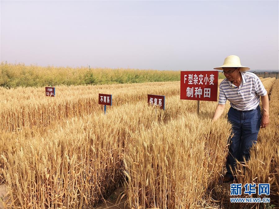 (在习近平新时代中国特色社会主义思想指引下——新时代新作为新篇章·习近平总书记关切事·图文互动)(3)让百姓吃得饱还要吃得好——夯实粮食安全基础端牢中国饭碗