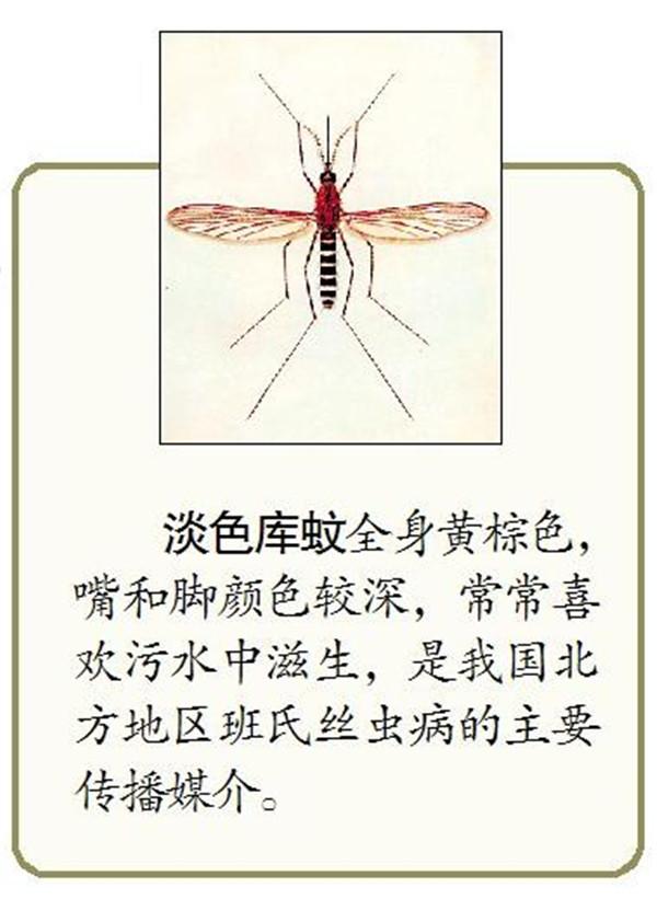 高温大雨蚊子来袭 老人儿童爱中招儿